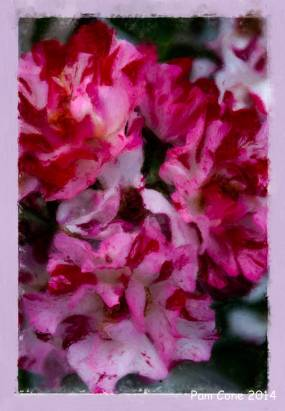 20140808-Roses 3