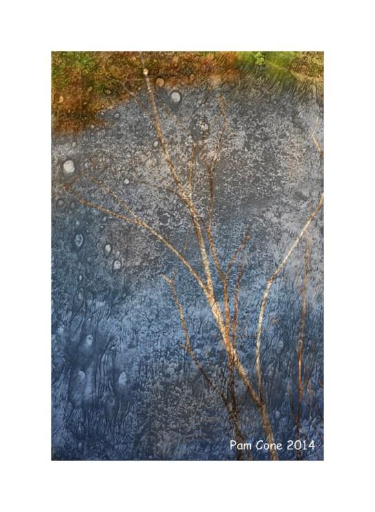Citrasolv twig pond
