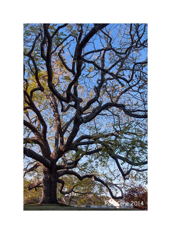 Big Oak Arcata