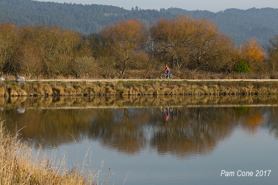Bicyclist at the Acata Marsh_