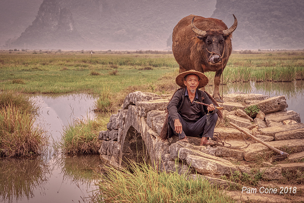 Farmer with ox_